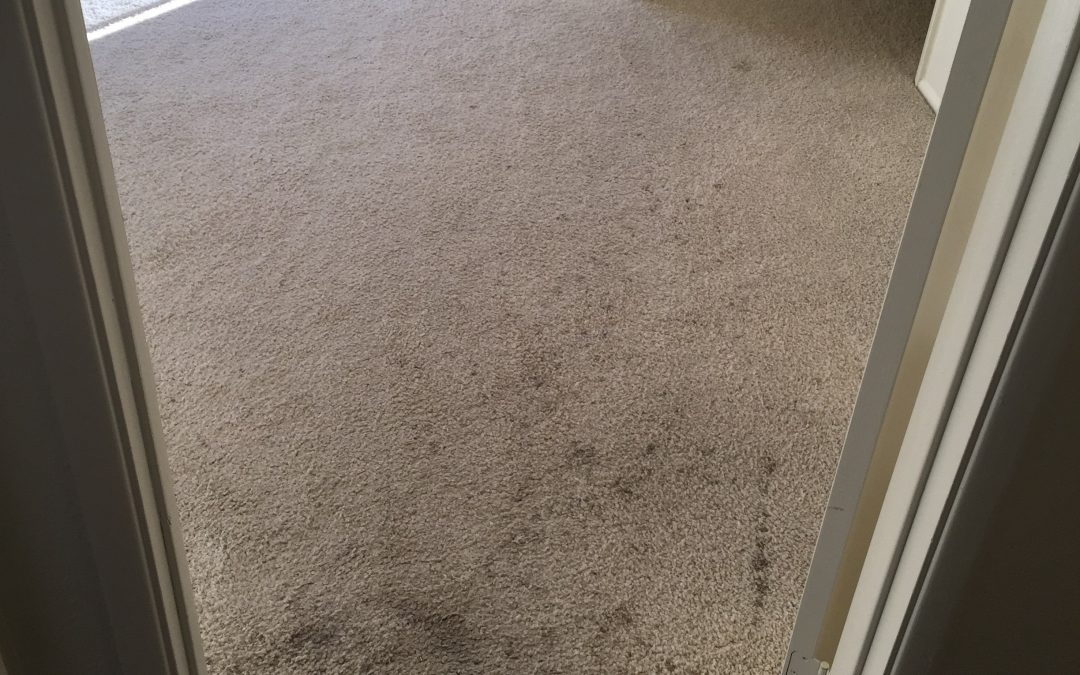 Carpet Cleaning In Phoenix Az Carpet Vidalondon