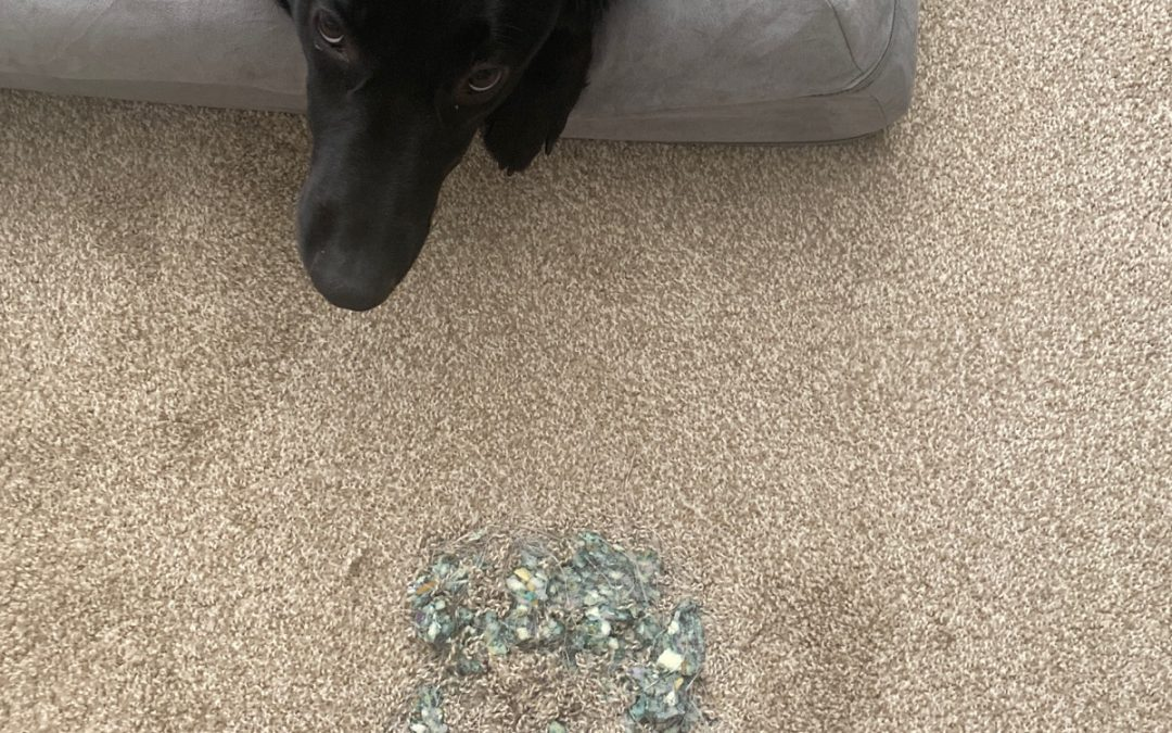 Phoenix, AZ Carpet Repair from Pet Damage.