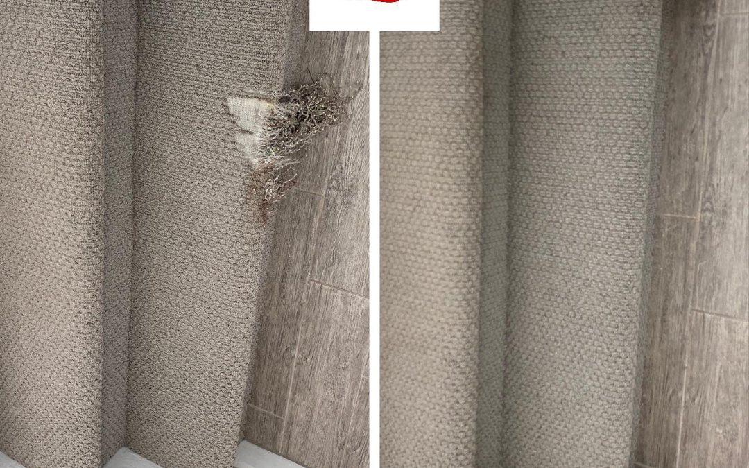 Carpet Repair in Phoenix, AZ