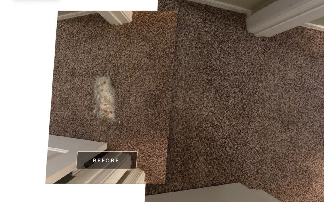 Phoenix Carpet Repair: Pet Damage